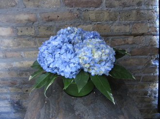 $50.00~Vased Blue Hydrangea~Item 10-A