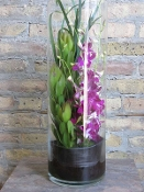 $95.00~Dendrobium Orchids In Clear Cylinder