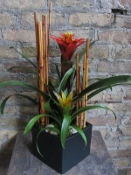 $75.00~Bromeliad Combo In Matte Black Container