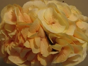 $75.00~Designer Choice-Additional $10 Free Flowers