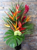 $135.00~Tropical Paradise