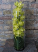 $125.00~Cymbidium Orchid In Clear Cylinder