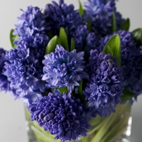 $50.00~Vased Hyacinth~Item-15-A